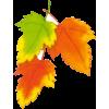 Autum leafs - Ilustracije -