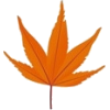 Autumn Leaf - Uncategorized -