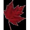 Autumn Leaves - 植物 -