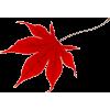 Autumn Leaves - Plantas -