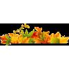 Autumn Leaves - Pflanzen -