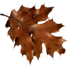 Autumn Leaves - Piante -