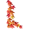 Autumn Leaves - Plants -