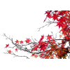 Autumn Tree - Uncategorized -