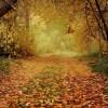 Autumn - Tła -