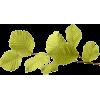 Autumn - Plants -