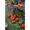 Autumn - Meine Fotos -