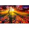 Autumn - Natureza -