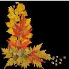 Autumn - Natura -