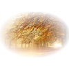 Autumn - Nature -