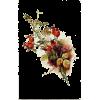 Autumn - Plantas -