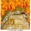 Autumn - Natural -