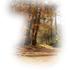Autumn - Natur -