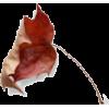 Autumn - Biljke -