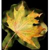 Autumn - Uncategorized -