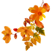 Autumn flowers - Plants -