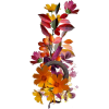 Autumn flowers - 植物 -