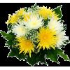 Autumn flowers - Piante -