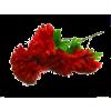Autumn flowers - Plants -