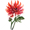 Autumn flowers - Biljke -