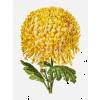 Autumn flowers - Pflanzen -