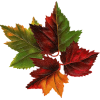 Autumn leafs - Other -