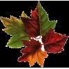 Autumn leafs - Illustrations -