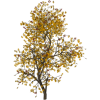 Autumn tree - Natural -