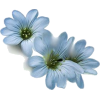 BLUE FLOWER - Illustrations -
