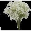 Baby's breath Flower - Biljke -