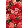 Background Flower - Background -