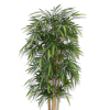 Bamboo shrub - Plants -