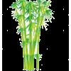 Bambus - Plants -