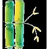 Bambus - Piante -
