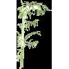 Bamboo (l) - Natura -