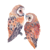 Barn owls unitedthread on Etsy - Ilustracije -