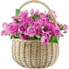 Basket roses - Rośliny -