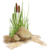 Beach Grass cattail - Natural -