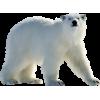 Bear - Animals -