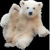 Bear - Tiere -