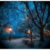 Beautiful Winter Night - Natureza -