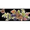 Berries - Plantas -