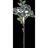 Berries - 植物 -
