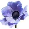 Big Blooms - Plants -
