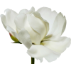 Big Blooms - 植物 -