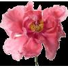 Big Blooms - Plantas -