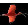Bird - Animales -