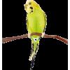 Bird - 动物 -
