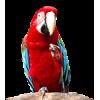 Bird - Uncategorized -