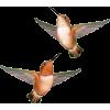 Birds - Ilustrationen -